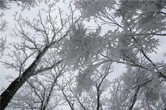 老君山上下雪了,一夜随风来,千树万树银花开!
