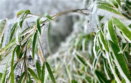 """慕""""冰""""而来——龙潭大峡谷绝美冰花、冰挂、冰瀑奇观惊艳上线!"""