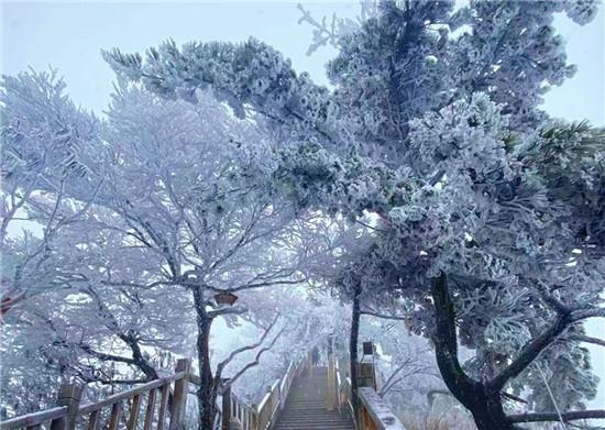 2021年首雪后的老君山,再次惊艳了整个冬天!