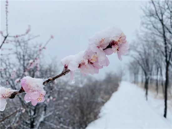 桃雪有幸,与人皆和丨龙潭大峡谷迎来牛年第一场桃花雪