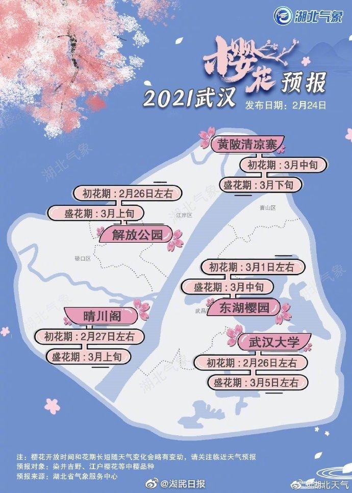 期待!武汉樱花2月底迎来初花期