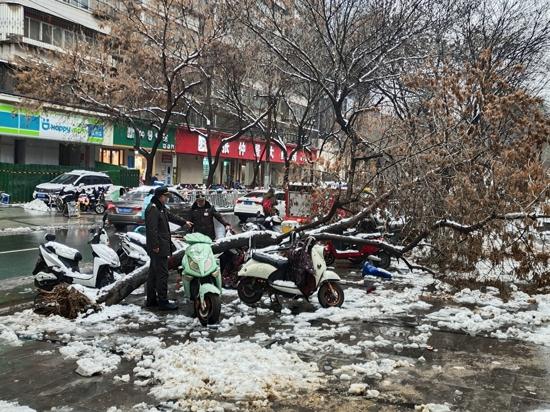 大雪压断树枝隐患多 文化路办事处巡防队员及时抢险保畅通