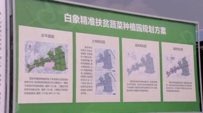 """中央""""一号文件""""聚焦三农 白象助力乡村振兴"""