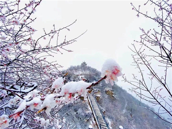 【花情预报第三期】荆紫仙山桃花已悄然绽放,春天真的来了!