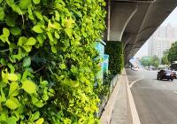 马路上的春天——道路绿化提升,城市更加美!
