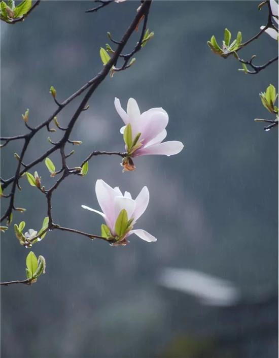 汉服游龙潭,花开迎女神丨三月活动带您玩转整个春天!