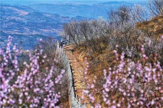"""万紫千红总是春,当荆紫仙山的""""十里桃花""""遇见""""醉美连翘""""!"""