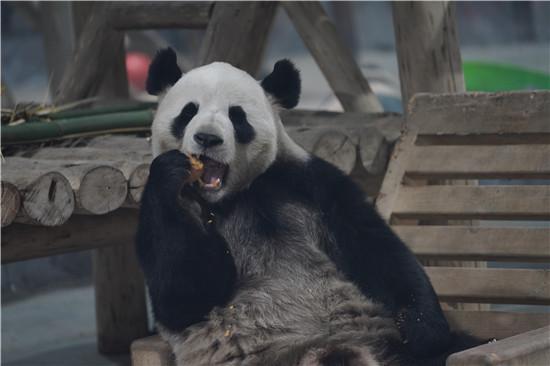 """""""千虎万竹、熊猫老虎双国宝""""伏牛山深处的栾川竹海野生动物园火了!"""