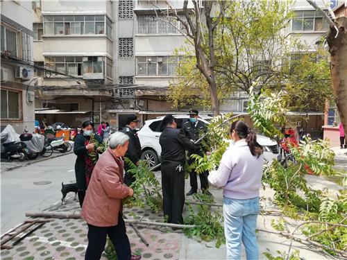 郑州一小区香椿树歪长影响楼上住户采光,巡防队员爬上树帮忙修剪