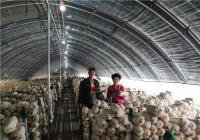 九三学社河南省科学院委员会生物所支社主委程雁指导春季平菇管理技术