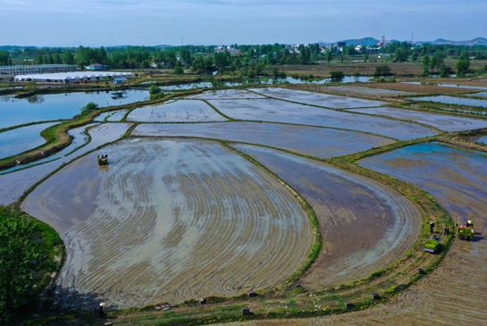 信阳光山县:谷雨至 插秧忙