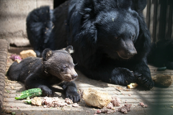 """郑州市动物园喜添""""新萌宠"""",五一等你来""""撩""""!"""