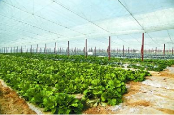 全国蔬菜生产形势向好 供应持续增加