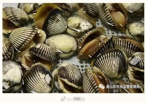 河北唐山发布食用贝类安全警示 唐山提醒近期不食用野生毛蚶海虹