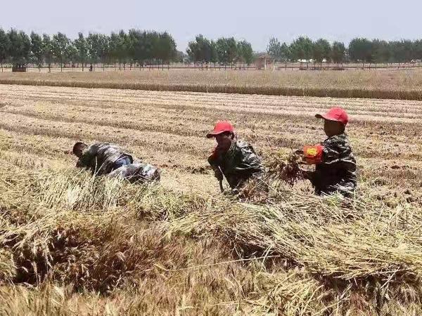 """汝南县金铺镇180名党员为""""三夏""""生产保驾护航"""