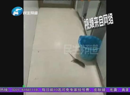 郑州市锦艺LOFT公寓频现老鼠业主崩溃 业主:老鼠跟我们打游击