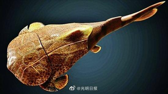 重庆发现4.23亿年前鱼化石