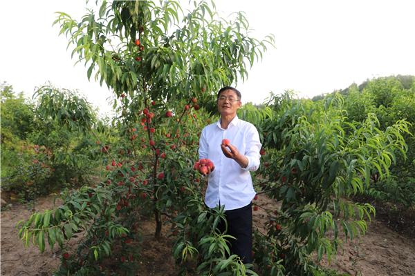 耕种在希望的田野上——记桐柏县城郊乡北杨庄村致富带头人汪桂田