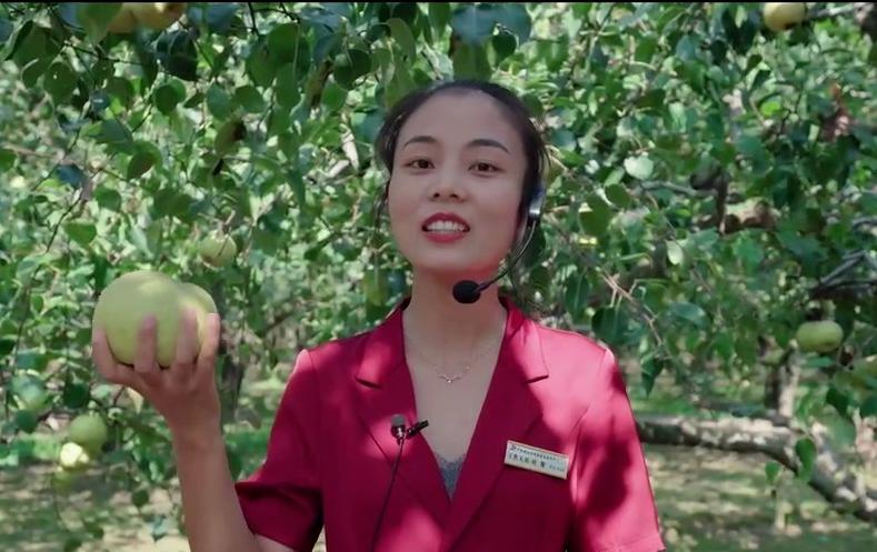 宁陵2021年农民丰收节暨第十五届酥梨采摘节欢迎您