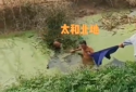 商丘七旬老党员跳水救八旬落水老人
