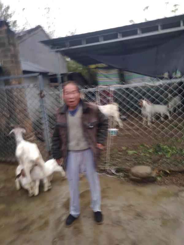 邓州市汲滩镇张井村:养羊摘掉贫困帽 致富路上喜洋洋
